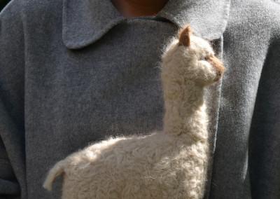 gefilztes Alpaka groß